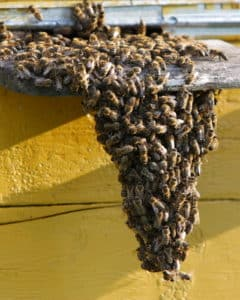 Bee Removal Corona