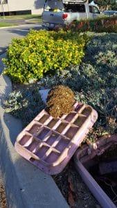 Bees in Sprinkler Valve Box