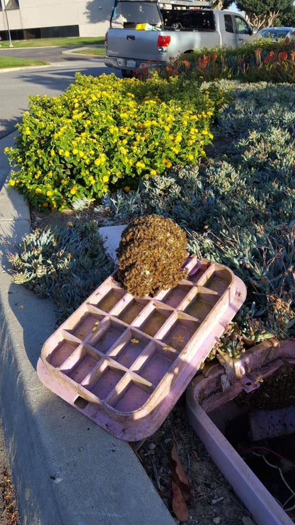 Bees in Sprinkler Valve Box