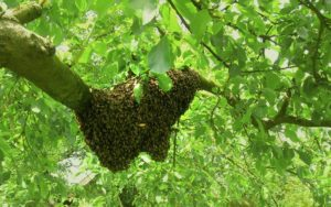 bee removal riverside