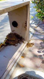 Bee Swarm Removal Riverside, CA