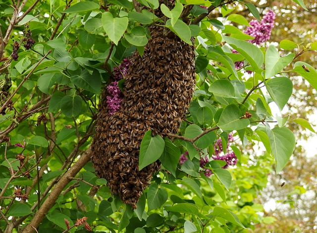 Bee Swarm Rancho Cucamonga