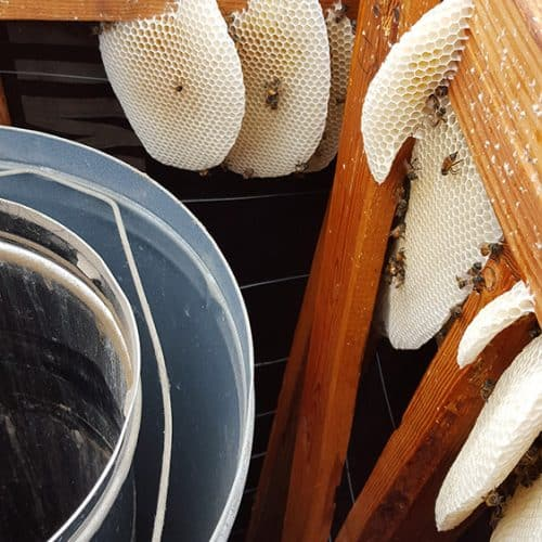 Bees in a Chimney