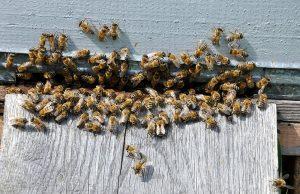 Menifee Bee Removal
