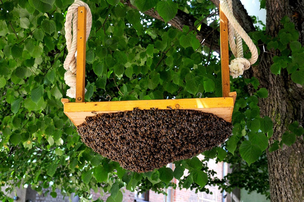 Bee Removal Jurupa Valley CA
