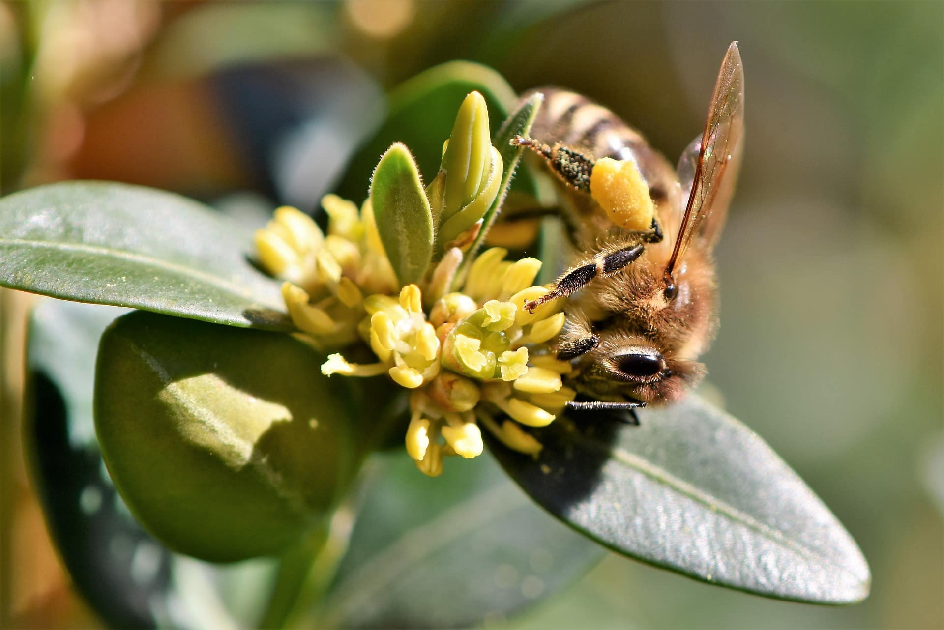 7 things you didnt know about bees riverside bee removal pros